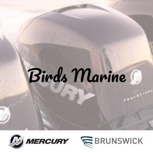 Birds Marine